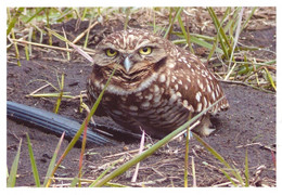 Owl Calgary Alberta Canada Used With Stamp - Birds