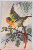 Illustrateur Illustratrice Catharina Klein Oiseau Rouge-Gorge Edition HWB SER 4272 - Klein, Catharina