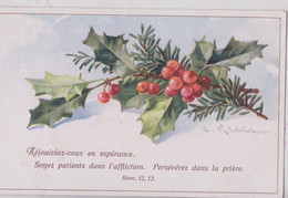 Illustrateur Illustratrice Catharina Klein Fleur Gui Houx - Klein, Catharina