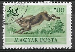 Hungary 1953. Scott #C113 (U) Fauna, Hare - Gebraucht