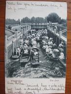 The Lock, Weybridge, Surrey - Posted 1904 (well Animated) - Surrey