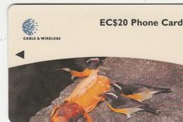 Dominica - Birds - Bananaquit - 248CDMB - Dominica