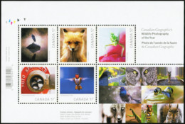 CANADA 2010 Wildlife Photography Of The Year Heron Hummingbird Fox Bird Birds Animals Fauna MNH - Colibrì