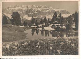 Flora Alpina Nelle Dolomiti - Crokus Verna - Gruppo Sella - Val Gardena - Other Cities