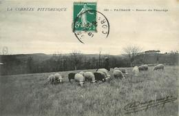 Dép 19 - Animaux - Moutons - La Corrèze Pittoresque - Paysages - Retour Du Pâturage - Bon état Général - Unclassified
