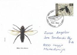 Slovenia 2002 Trbovlje Fossil Insect Fly Genus Bibio Prehistory Amber Special Handstamp Cover - Otros