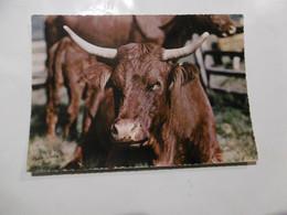 Vaches - On Rumine  - Humour - Photo Sully Bort - Koeien
