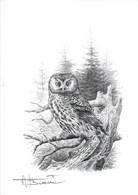 A.BUZIN  A4 SEPIA CHOUETTE DE TEGMALM - 1985-.. Birds (Buzin)