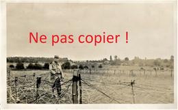 CARTE PHOTO FRANCAISE 322 RIT - POILU ET BARBELES A PLAILLY PRES DE ERMENONVILLE -  SENLIS OISE - GUERRE 1914 1918 - Guerra 1914-18