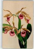 53091243 - Orchidee - Unclassified