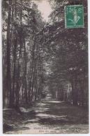 YVELINES - MARLY-LE-ROI - La Forêt - Allée Des Sapins - Marly Le Roi