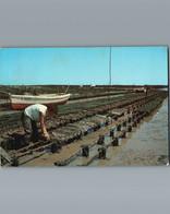Parc à Huitres  - Oestréiculture - Cpm -1980 - Pesca