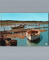 Parc à Huitres  - Oestréiculture - Cpm -1994 - Pesca