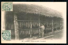 Algérie Culture Du Tabac Un Séchoir édition Idéale P.S Dos Vierge  Carte Rare  FRCR00007 P - Professions