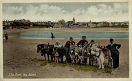 Elie From The Beach  ANE DONKEY EZEL ESEL MULES Donkeycollection - Fife