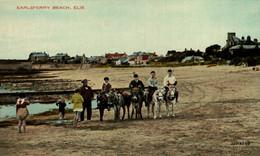 Elie Earlsferry Beach  ANE DONKEY EZEL ESEL MULES Donkeycollection - Fife