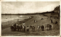 The Bay And Sands Elie  ANE DONKEY EZEL ESEL MULES Donkeycollection - Fife