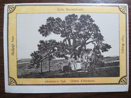 Abraham's Oak Of Mamre Hebron West Bank - Collections