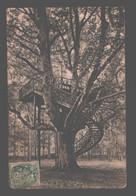 Bernay - L'arbre De Robinson - 1907 - Bernay