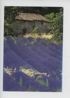 Image De Provence (cp Vierge N°6306 PEC As De Coeur) Mâs, Lavande - Provence-Alpes-Côte D'Azur