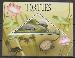 Tortue à Long Cou - Turtles