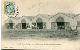 DANS LA CRAU - REFUGES Pour Les TAUREAUX De La MANADE De L' AUDIENCE - CARTE PRECURSEUR - - Non Classés