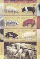 2011  Argentina Pigs   Souvenir Sheet MNH - Unused Stamps
