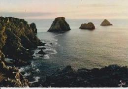 29 CAMARET-SUR-MER Les Tas De Pois Un Soir D'été - Camaret-sur-Mer