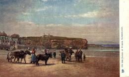 On The Sands At Roker Sunderland  ANE DONKEY EZEL ESEL MULES Donkeycollection - Durham