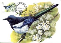 15201034 BE 20010326 Bx; Oiseau Buzin; Pie Bavarde; CM Cob2988 - Other