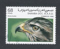 BUTEO - Sahara Español