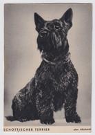 SCHOTTISCHER TERRIER - Cani
