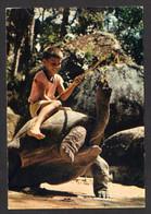 SEYCHELLES - Tortue Géante ( Editions Mancham-Zuber N° 1) Garçon Assis Sur La Tortue - Seychelles
