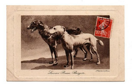LEVRIERS RUSSE BARZOIS - Dogs