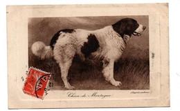 CHIEN DE MONTAGNE - Dogs