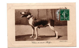 CHIEN DE TRAIT BELGE - Dogs