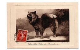 CHOU CHOU CHIEN DE MANDCHOURIE - Dogs