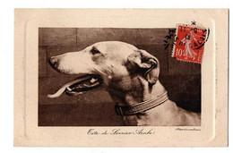 TETE DE LEVRIER ARABE - Dogs