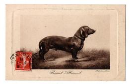 BASSET ALLEMAND - Dogs