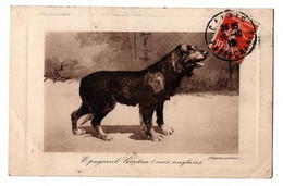EPAGNEUL GORDON ANGLAIS - Dogs