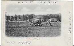 24 LABOUR EN PERIGORD CHARRUE EDITEUR A PERIGUEUX 1902 ANIMATION  BEAU  PLAN A  VOIR - Landwirtschaftl. Anbau