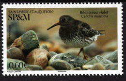 St. Pierre & Miquelon - 2021 - Birds - Purple Sandpiper - Calidris Maritima - Mint Stamp - Neufs