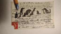 CPA Expédition Du Cdt Charcot  Pourquoi Pas Antarctique Pingouin Nids - Missions