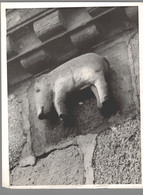 Photo Ancienne - Sélestat - Eglise Sainte Foy - Chevet - Corbeau - Lugares