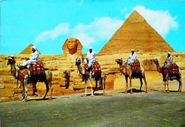 ► Egypte   1970 Chameau Camel - Andere