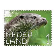 D(B) 205 ++ NEDERLAND NETHERLANDS PAYS BAS 2021 BELEEF DE NATUUR OTTER MNH ** - Ungebraucht