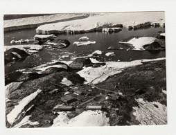 Taaf   SUR CPM Terre Adélie La Base Dumont D'Urville En Février 1968/N°35 PEU CONNUE - Covers & Documents