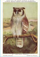 KBIN (ca 1940) - Beschermde Vogels In Belgisch Congo - 29 - Grand-Duc Lactescent, Arenduil Van Verreaux, Bubo Lacteus - Pájaros