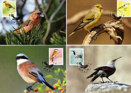 Liechtenstein 2021 Set 4 MC Maximum Cards Native Songbirds Heimische Singvögel Oiseaux Chanteurs Indigènes - Other