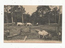 Cp , 58 , MOULINS ENGILBERT,  Forêt De La Fontaine Aux Boeufs ,chargement Des Pieds De Chênes ,boeufs - Moulin Engilbert